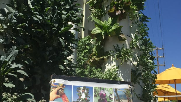 Will Urban Vertical Gardens Save Our Food System?