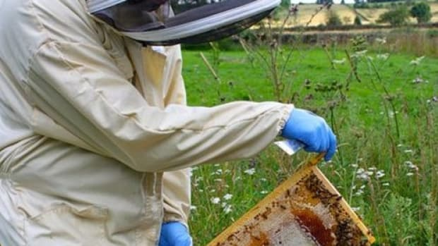 beekeeper-ccflcr-lucymjharper1