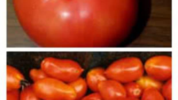 PlumTomatoes3
