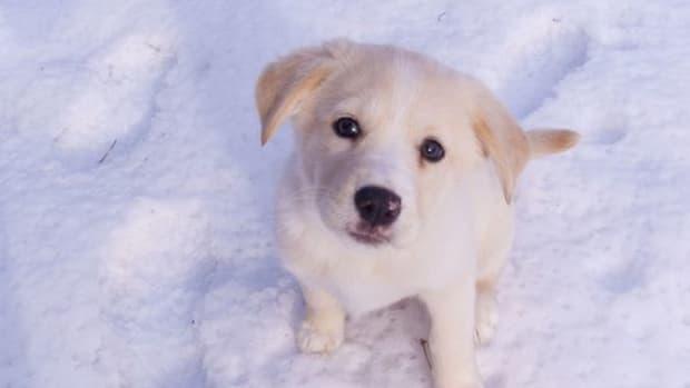 snowdog-ccflcr-jpctalbot