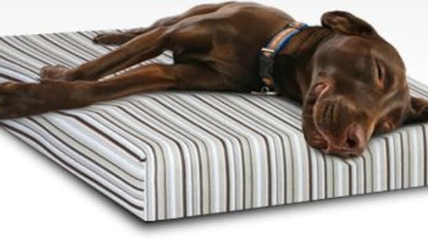 essentia_dog_bed
