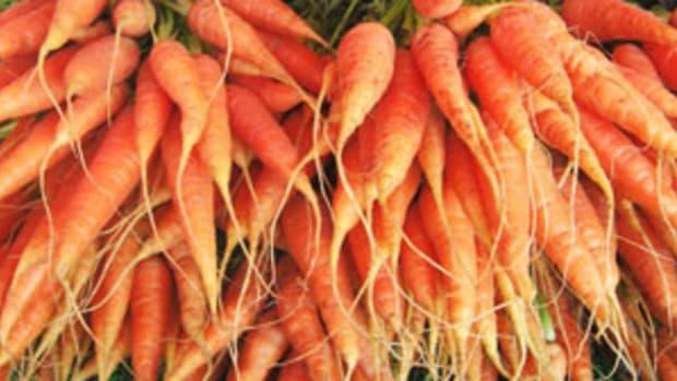 carrots_3001