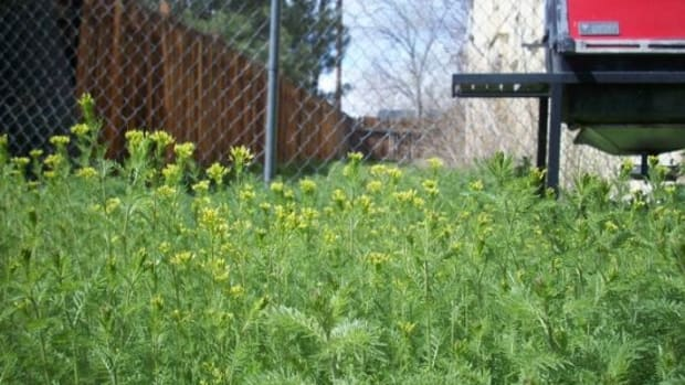 weeds-ccflcr-AlishaV