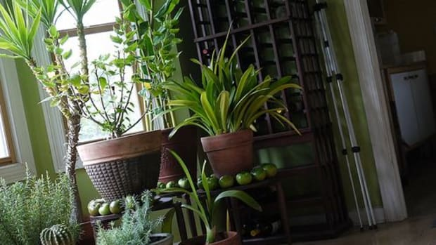 houseplants-ccflcr-F-D-Richards