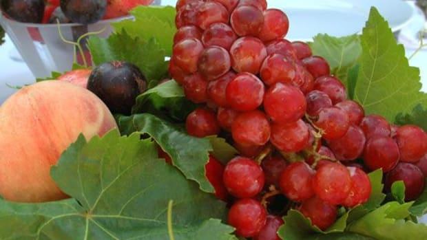 fruits