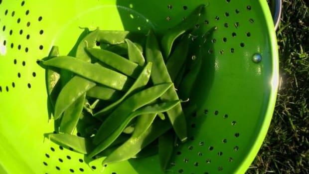 peas-ccflcr-maria-keays