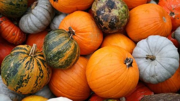 somebox_heirloom_pumpkins