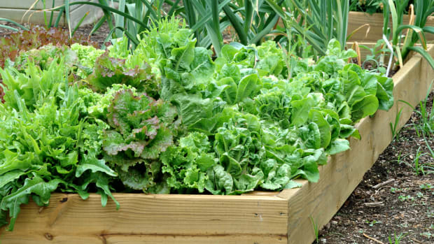 summer garden bucket list