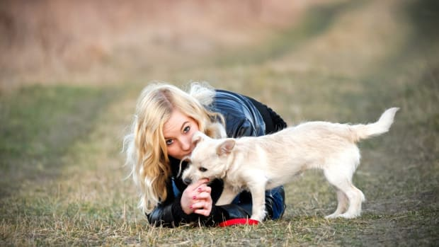 Pesticide Found  in Pet Flea Collars and Sprays May Cause Cancer in Humans