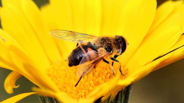 From Bee Pollen to Royal Jelly: Decoding the Super Healthy Bee Foods
