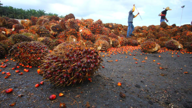 PepsiCo Slammed for Palm Oil Deforestation Despite Updated Commitment