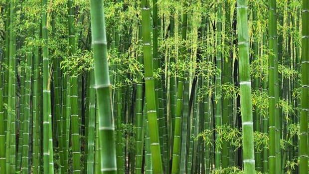 bamboo-ccflcr-inoc