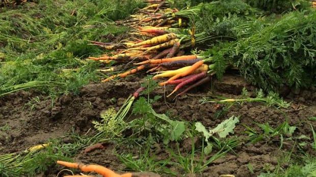 Capay Organic is an organic farm.