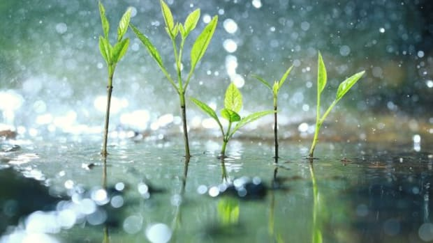 How To Successfully Collect Rainwater for Your Garden