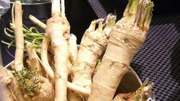 horseradish-ccflcr-avlxyz