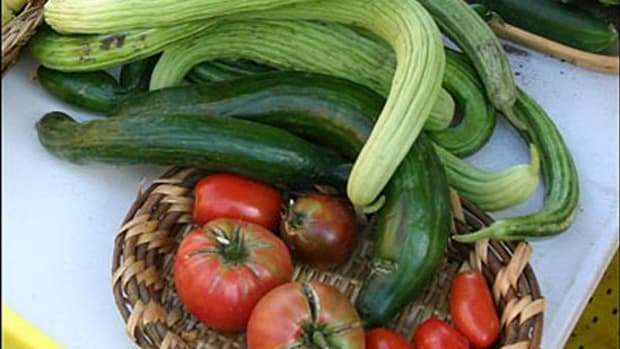 tomatoescucumbers-ccflcr-LaGrandeFarmersMarket1