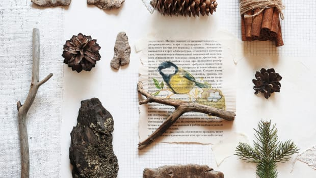 Start your own natural history collection.
