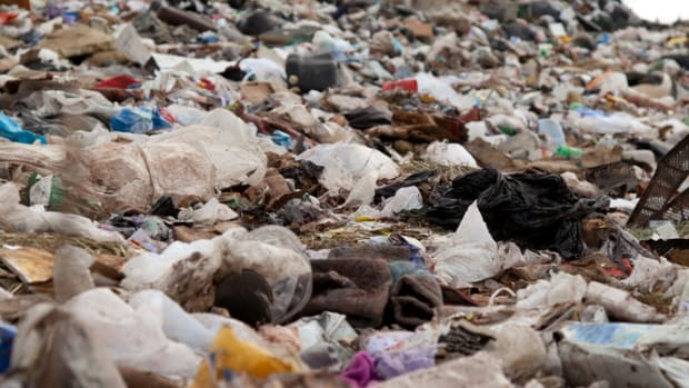 Lookout, Landfills: New Bacterium Feeds on Plastic Waste