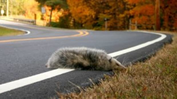 redneck-roadkill-montana-ccfl