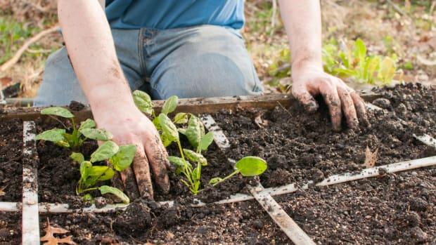 square foot gardening tips