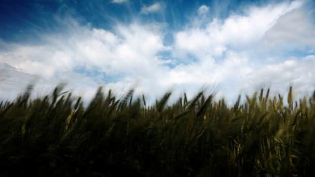 cornfield-ccflcr-LaszloNagyHU1