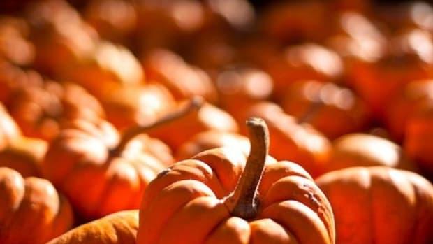 pumpkin-ccflcr-robertsdonovan