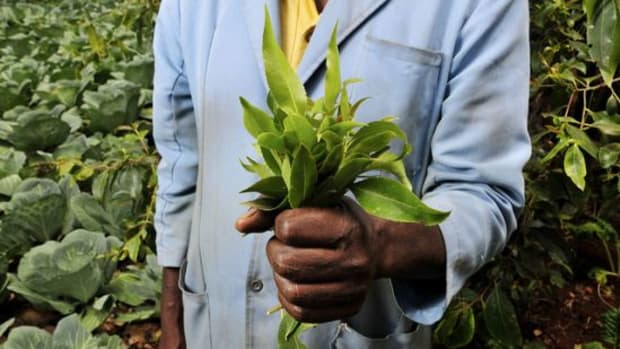 kenyanfarmer-ccflcr-CIAT-International-Center-for-Tropical-Agriculture1