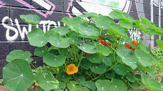 newtowngrafitti_gardens