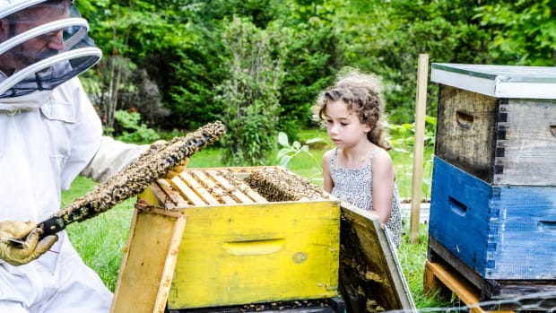Organic Farming Can Help Save the Bees, Study Shows