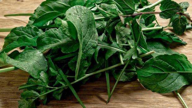 Starting your salad garden now.