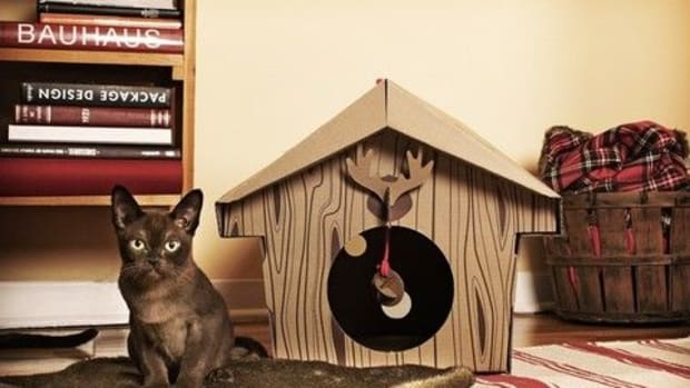 cat-chalet-montreal1
