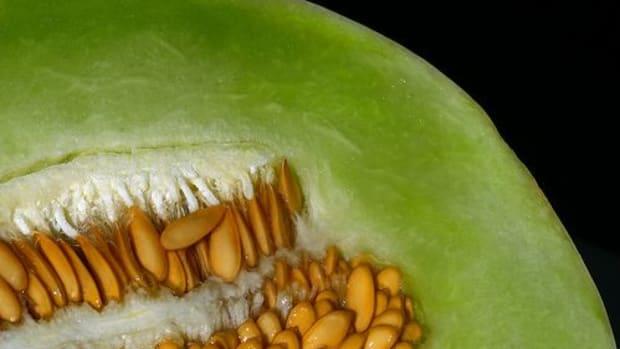honeydew-melon-ccflcr-muffet