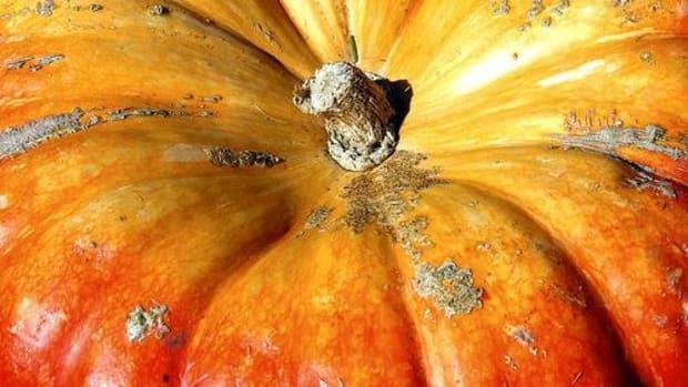 pumpkin-ccflcr-solyanka