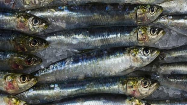 sardines-ccflcr-vintagedept