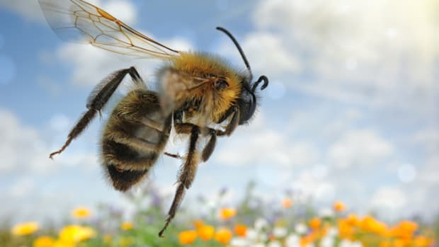 Federal Court Rules in Favor of Honey Bees, Blocks EPA-Approved Pesticide