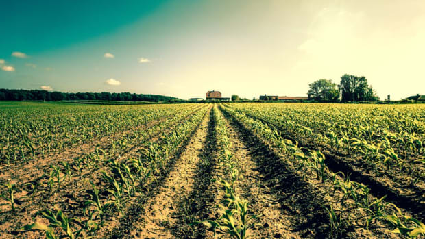 Modern Commercial Farming is to Blame for Global Hunger Issues
