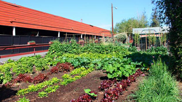 How to Design a Community Garden for More Than Food