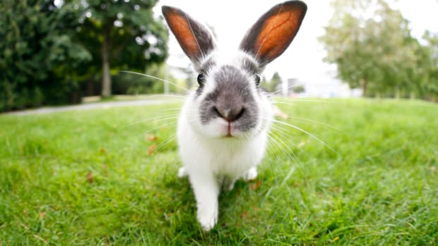 California to Become the First State to Ban Animal Testing for Cosmetics