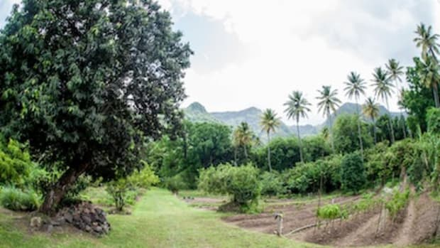Organic Garden to Farm Restaurant in St. Lucia