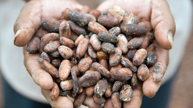 Mars Will Invest $1 Billion In Sustainable and Ethical Cocoa Supply Chain