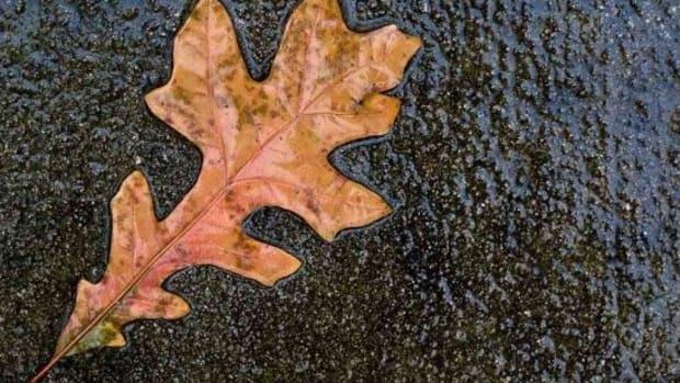 leaf-ccflcr-robertsdonovan