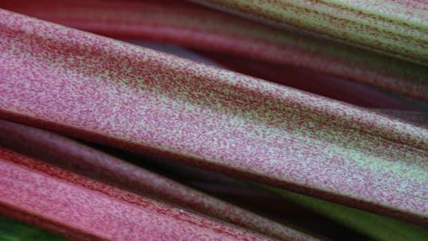 rhubarb-ccflcr-mwri