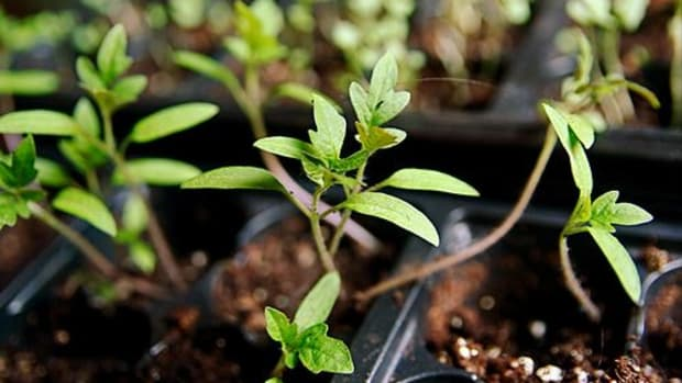 stevendepolo_plants