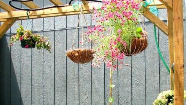 hangingbasket-ccflcr-saeru