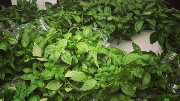 25 Percent of Farmers Market Fresh Herbs Tested Positive for E. Coli