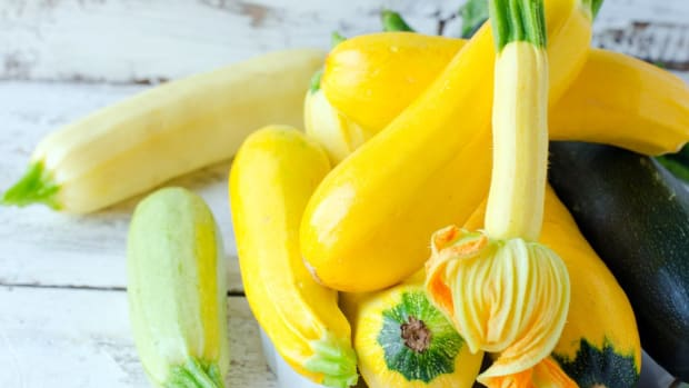 delicious summer squash recipes