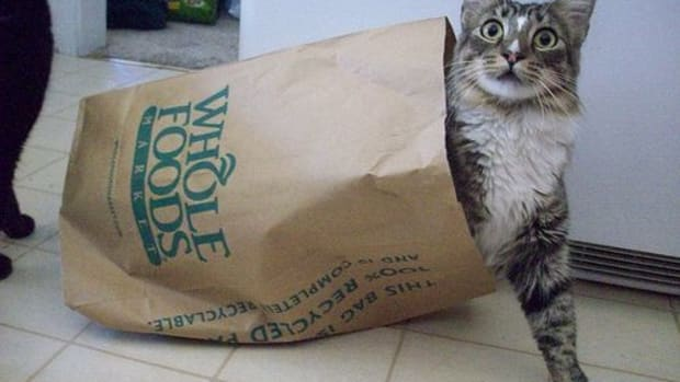 cat_in_bag_ccfler_AlishaV