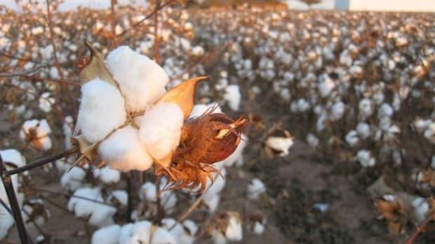 cottonfield-ccflcr-kimberlykv1