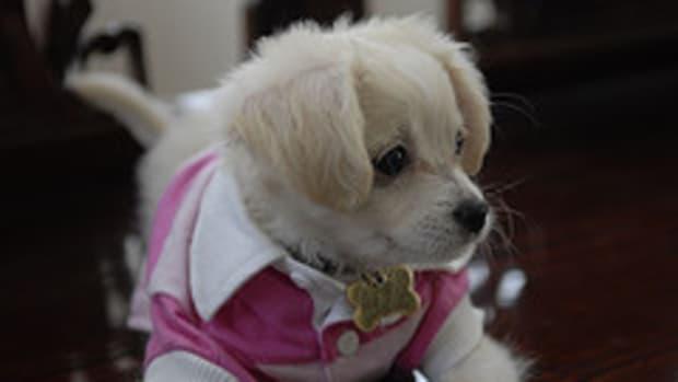 puppycollar3