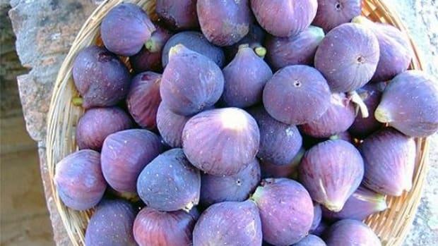 figs-ccfclr-marlenaarellanoongpin